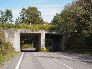 小野川湖へ道とレークラインの立体交差