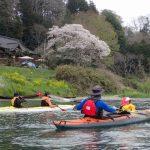 那珂川 4月 桜 お花見 カヤック