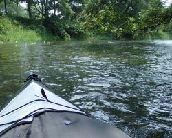ハグロトンボと万水川