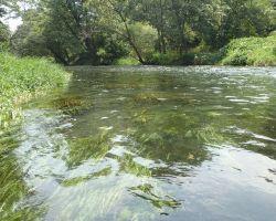万水川 水藻