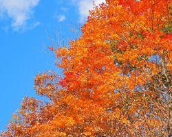 桧原湖 大山祗神社の対岸の紅葉