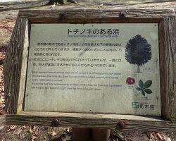 トチの木のある浜 案内板