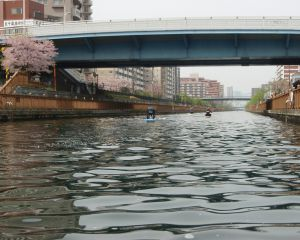 小名木川のSUPのグループ
