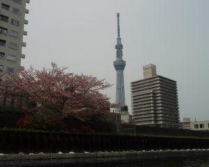 横十間川からスカイツリーと桜