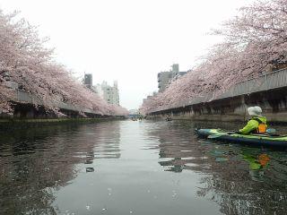 仙台堀川 木更木橋 近く