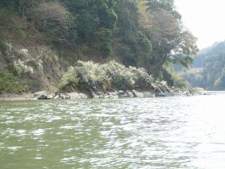 那珂川お花見カヤック2017/4-No1