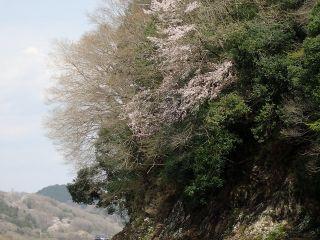 那珂川お花見カヤック2017/4-No5