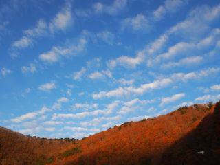 本栖湖畔 朝焼けの紅葉